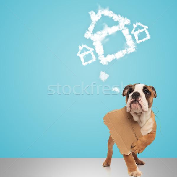 Englisch Bulldogge halten Zeichen Träume neues Zuhause Stock foto © feedough