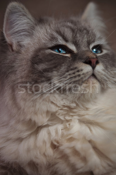 beautiful cat with superior look  Stock photo © feedough
