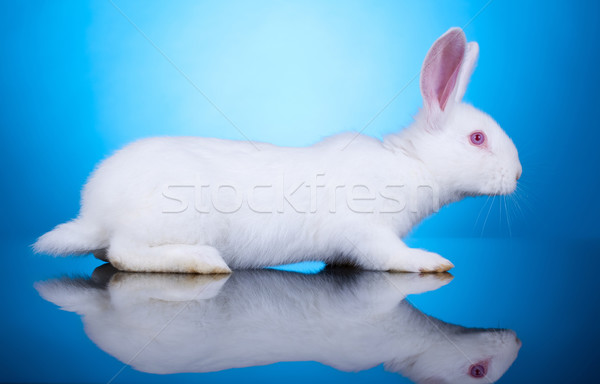 side view of a little bunny Stock photo © feedough