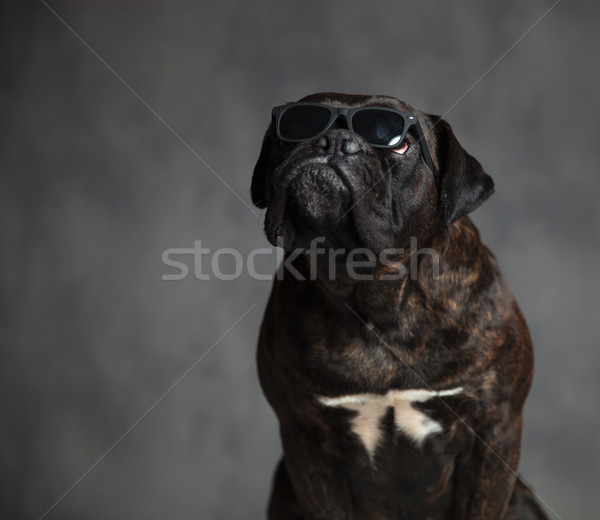 ülő kutya napszemüveg külső felfelé valami Stock fotó © feedough