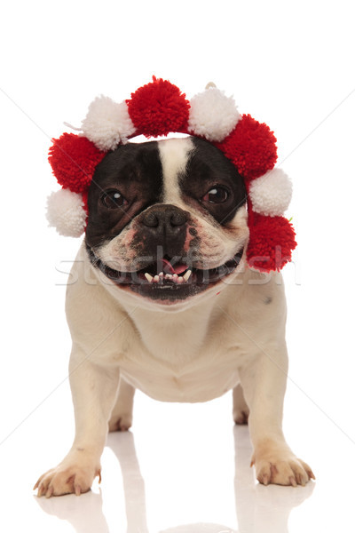 playful french bulldog is happy about his new headband Stock photo © feedough