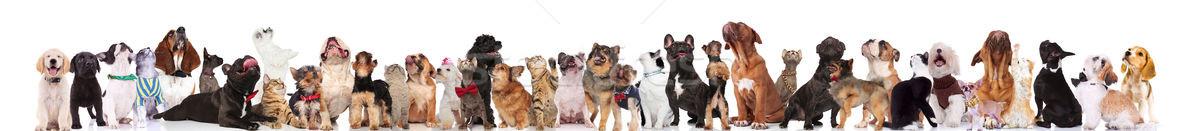 Ciekawy zespołu psów kotów stałego Zdjęcia stock © feedough