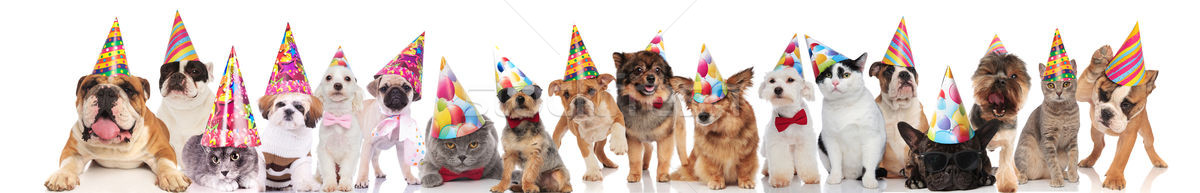 large group of party domestic animals of different breeds Stock photo © feedough