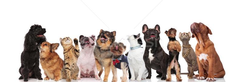 Aanbiddelijk team nieuwsgierig verschillend huisdieren Stockfoto © feedough