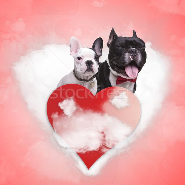 Сток-фото: любви · французский · щенки · сердце · облаке