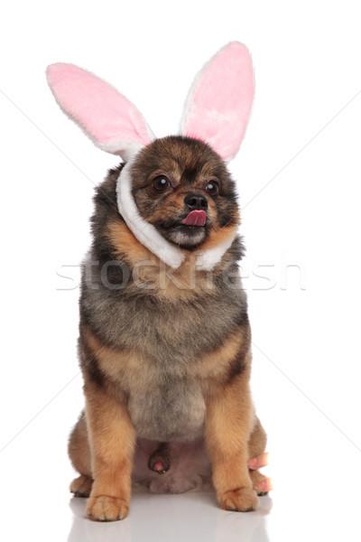 Drôle lapin séance langue exposé blanche Photo stock © feedough