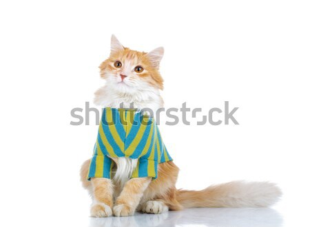 curious cat wearing clothes while sitting Stock photo © feedough