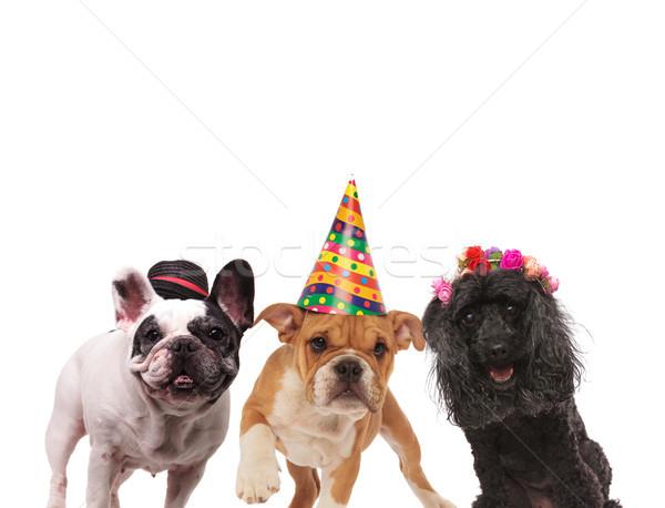Stock photo: three adorable dogs