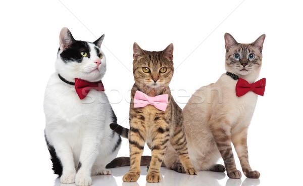 three cute cats wearing elegant bowties on white background Stock photo © feedough