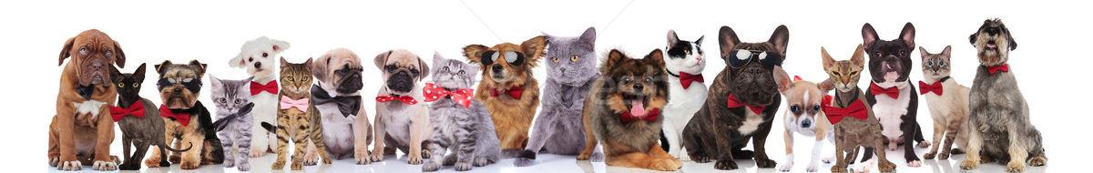 Grup mutlu kediler köpekler ayakta Stok fotoğraf © feedough