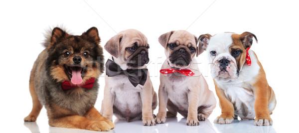 Cuatro feliz elegante perros blanco diferente Foto stock © feedough
