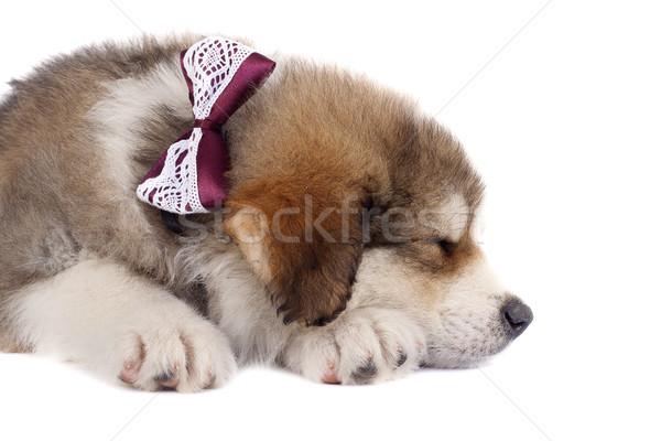 sleeping cutie Stock photo © feedough