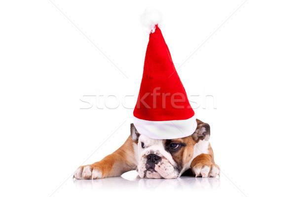 english bulldog puppy wearing a christmas hat  Stock photo © feedough