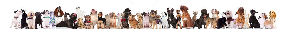 Molti singolare cani gatti cercare bianco Foto d'archivio © feedough