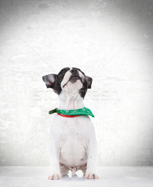 curious seated french bulldog puppy dog looking up Stock photo © feedough
