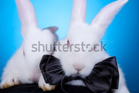 white rabbits pulling themselves out of a hat Stock photo © feedough
