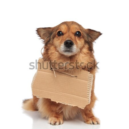 cute begging dog making puppy eyes looks up Stock photo © feedough