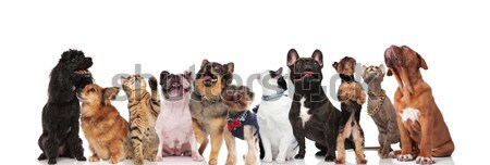 cute group of nine mixed pets looking up Stock photo © feedough