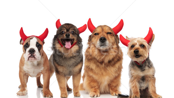 halloween team of four brown dogs dressed as devils Stock photo © feedough