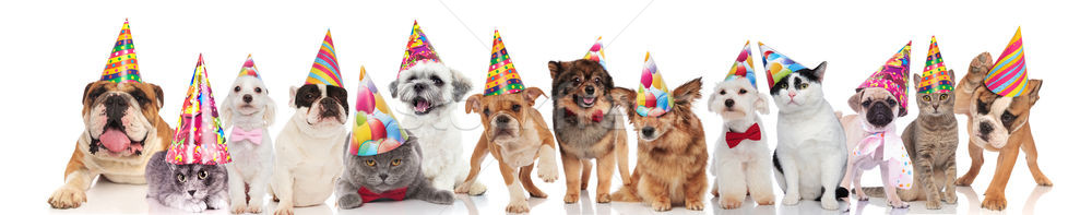 cute team of pets with colorful hats ready for party Stock photo © feedough