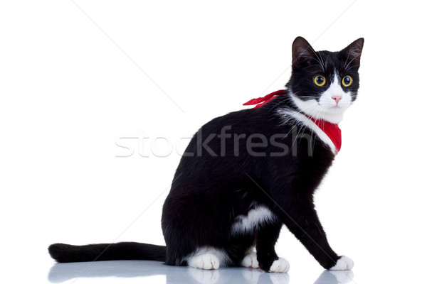 cat with red scarf Stock photo © feedough