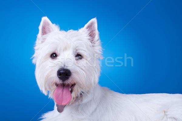 Kép zihálás áll kék portré fehér Stock fotó © feedough