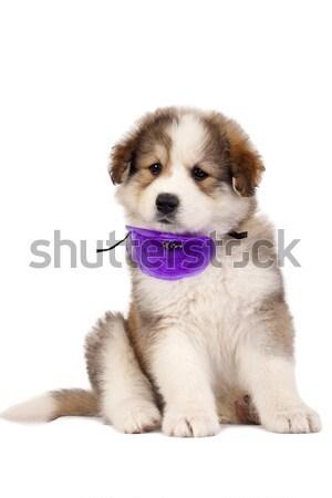 puppy Stock photo © feedough