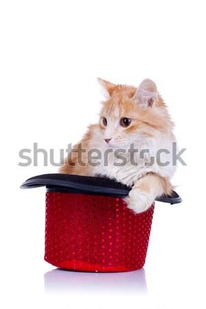 Китти Постоянный шоу Hat Cute красный Сток-фото © feedough