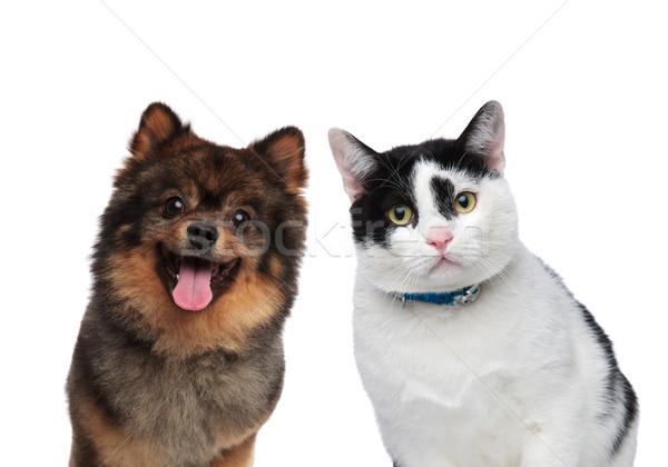 Aç köpek kedi arkadaşlar bekleme öğle yemeği Stok fotoğraf © feedough
