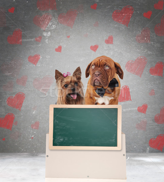 happy couple of in love dogs with a blank greenboard Stock photo © feedough