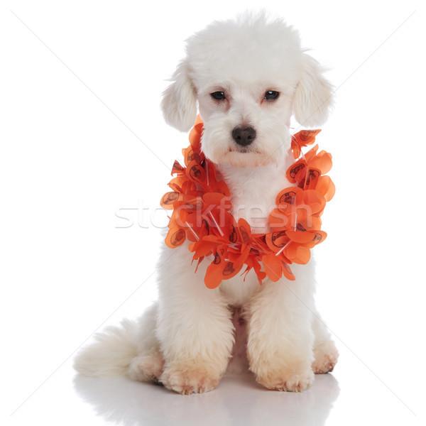 Aranyos fehér szomorú búcsú Hawaii visel Stock fotó © feedough
