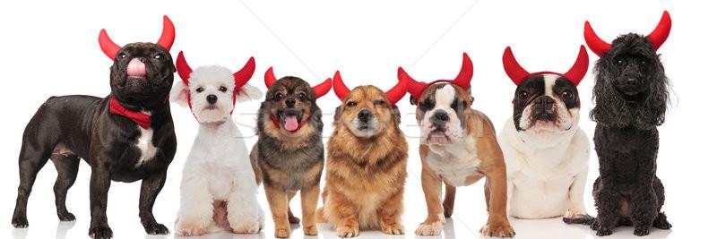 Foto d'archivio: Cute · gruppo · sette · cani · indossare · diavolo