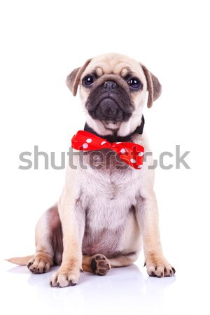 Chiot chien rouge cute séance regarder Photo stock © feedough