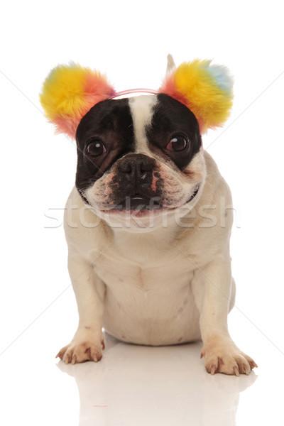 smiling french bulldog with ear headband looking at camera Stock photo © feedough