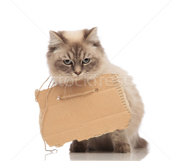 cute beggar grey cat wears a carton sign Stock photo © feedough