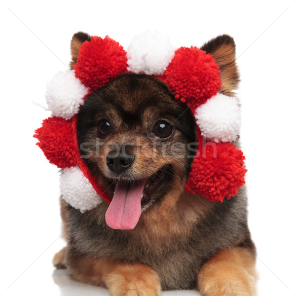 curious pomeranian wearing fluffy headband looks to side while p Stock photo © feedough