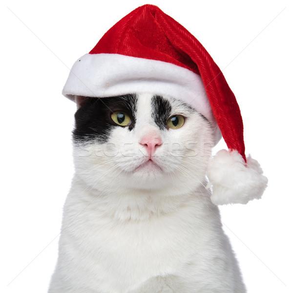 close up of an adorable cat wearing a santa cap Stock photo © feedough