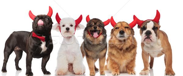 Beş sevimli köpekler kırmızı şeytan Stok fotoğraf © feedough