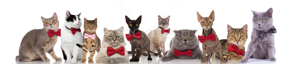 Groot team gentleman katten permanente vergadering Stockfoto © feedough