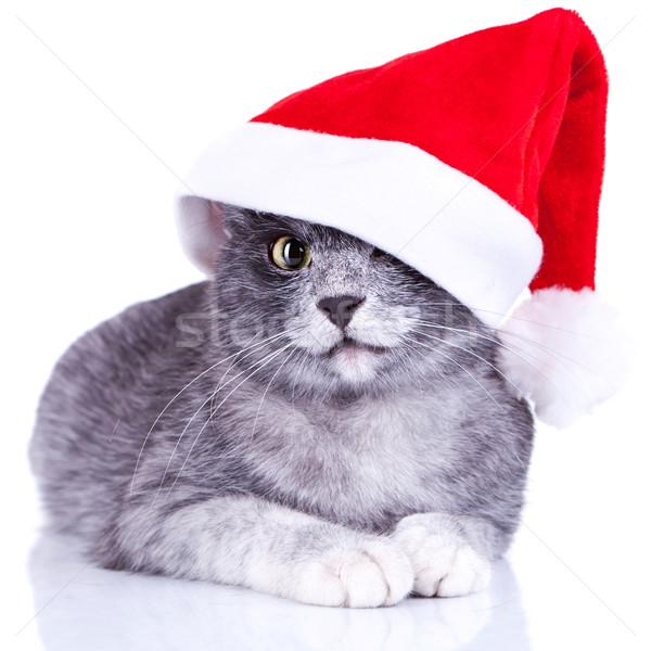 愛らしい キティ サンタクロース キャップ 動物 ストックフォト © feedough