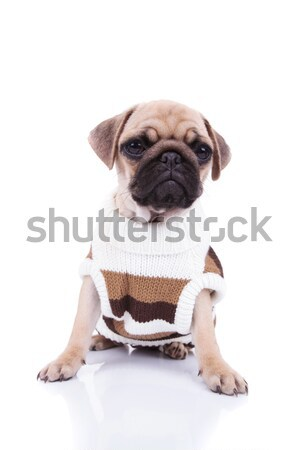 Cute puppy hond nek boeg vergadering Stockfoto © feedough