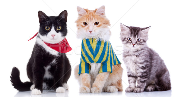 three curious seated cats  Stock photo © feedough