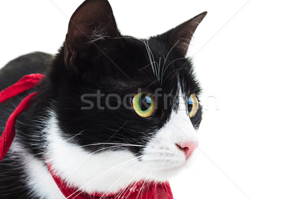 close up of a cute cat wearing red scarf Stock photo © feedough