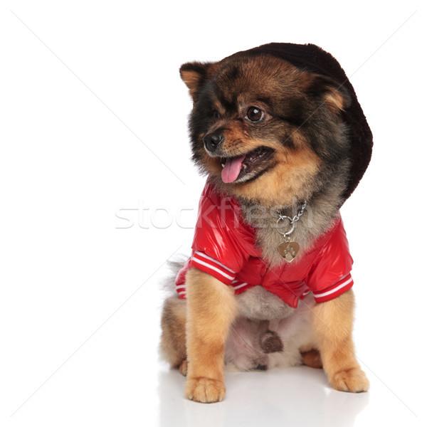 Nieuwsgierig Rood jas kant vergadering Stockfoto © feedough