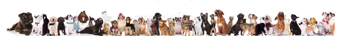 Foto stock: Curioso · perros · gatos · perro