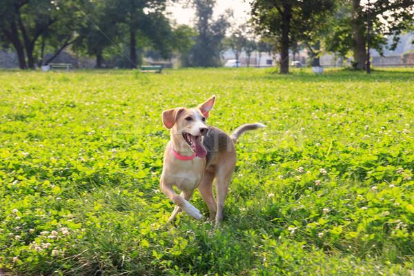 щенков собака играет создают трава зеленый Сток-фото © feelphotoart