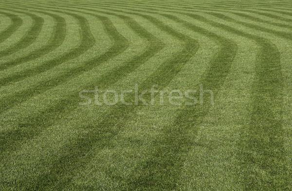 Zöld fű minta vág golf természet mező Stock fotó © FER737NG