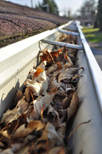Bladeren regen goot home onderhoud vallen Stockfoto © FER737NG