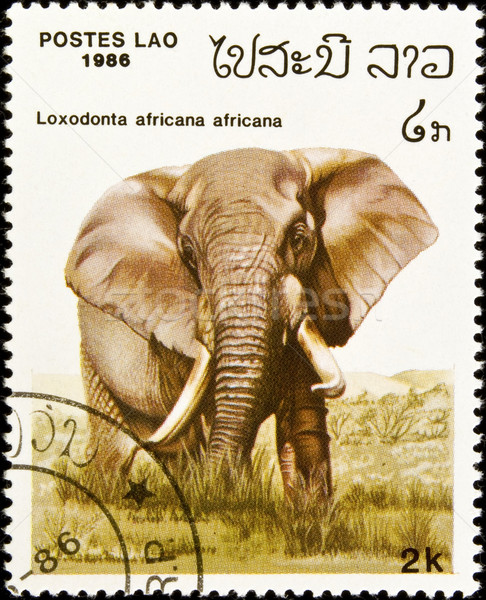 African elephant stamp. Stock photo © FER737NG