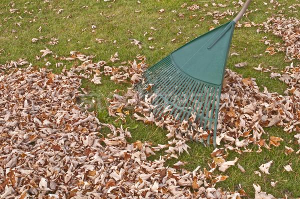 Gereblye ősz kertészkedés munka őszi szezon fa Stock fotó © FER737NG